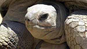 """وفاة """"سلحفاة الملك فاروق"""" ثاني أكبر حيوان على وجه الأرض في مصر"""