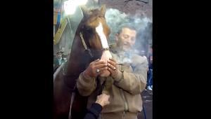 إجبار حصان على تعاطي المخدرات في فرح بمصر.. ومطالبات برلمانية بالتحقيق في الواقعة
