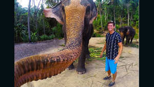 """صورة طريفة.. فيل يتولى زمام الأمور ويلتقط """"سيلفي"""" لنفسه"""