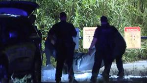 الشرطة الأمريكية تعثر على بقايا جثة محاطة بالتماسيح
