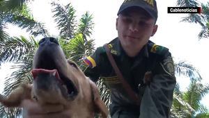 """بالفيديو: مهربو المخدرات في كولومبيا """"يغوون"""" الكلاب البوليسية بـ""""عطور نسائية"""""""