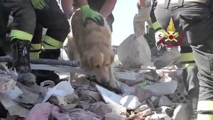 عاد من الموت.. انتشال كلب حي بإيطاليا قضى تسعة أيام تحت أنقاض الزلزال