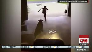 كاميرا المراقبة ترصد صبياً يسرق.. بعض الحب من كلب الجيران