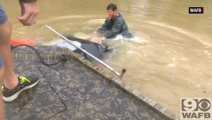 شاهد إنقاذ سيدة من سيارة غارقة في فيضانات لويزيانا