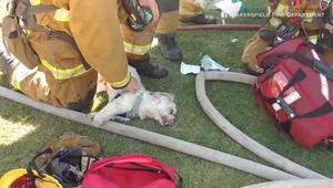 شاهد.. إسعاف كلب بالأوكسجين بعد إنقاذه من حريق