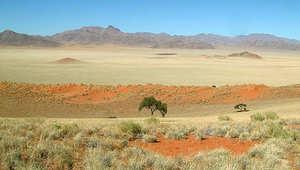 """من يشكل """"دوائر الجن بصحراء ناميبيا؟"""
