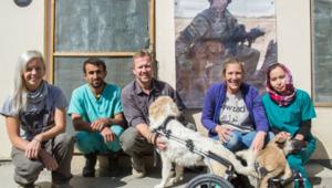 """CNN تختار مؤسس منظمة تجمع الكلاب بالمحاربين """"بطل"""" خدمة المجتمع لعام 2014"""