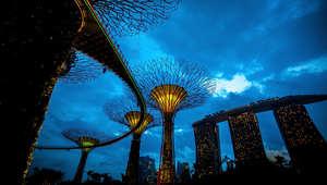 أبراج Supertrees في سنغافورة