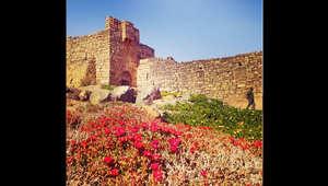 قلعة الأزرق، شرق الأردن، في فصل الربيع.