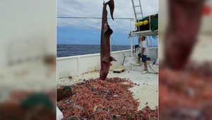 القرش العفريت يعود مجدداً لكنه ليس وحده هذه المرة