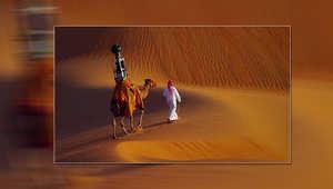 الجمل يحمل الكاميرا في صحراء الإمارات