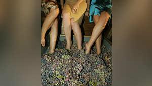 صناعة النبيذ في لبنان.. هل تصمد بوجه انتشار العنف والتشدد الديني؟