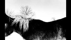 خيول بين مصيرين إما القوة للسباق أو الضعف لتتحول إلى لحم مغلف