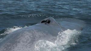 أفضل الأماكن لمشاهدة الحيتان في جميع أنحاء العالم