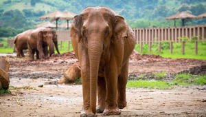 تعشق الفيلة؟ رافقها عن قرب في هذا المنتزه التايلاندي