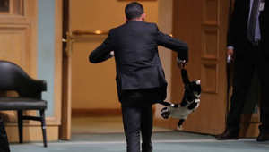 """الأردن.. مطاردة """"قط"""" اقتحم مجلس النواب تثير سخرية نشطاء وسخط حماة الحيوان"""