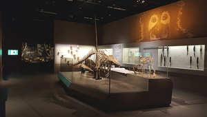 لمحة داخل متحف سنغافورة المذهل للتاريخ الطبيعي