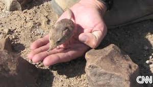 العثور على نوع جديد من الثدييات بالصدفة