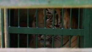 بعد جهد عالمي مكثف.. خرج 16 حيواناً من غزة