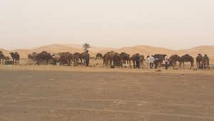 """""""مرزوكة"""" المغربية.. رمال الشفاء وفتنة الصحراء"""