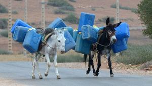 تقرير: آلاف السيارات في المغرب تسير بوقود جزائري مهرب