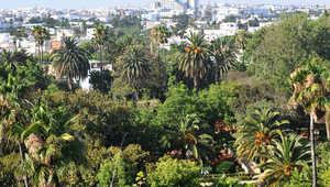 جدل حول تعليق من سياسي إسلامي مغربي حول المهدي المنتظر وبناء مدينة