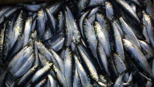 أيًاما على مقتل محسن فكري.. أسعار السمك تنخفض بشكل ملحوظ في الحسيمة