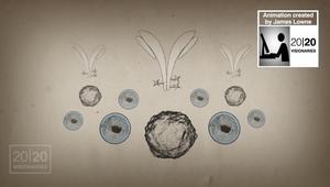 عالم يطور علاجاً جديداً باستخدام الأجسام المضادة يقتل الخلايا السرطانية دون الإضرار بالأنسجة السليمة