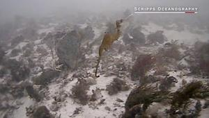 لأول مرة.. علماء يصورون تنين البحر الياقوتي
