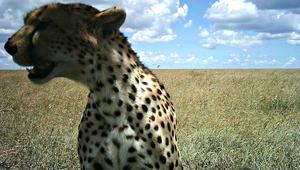 """15 صورة """"سيلفي"""" لحيوانات ستغير من نظرتكم لعالم الغاب"""