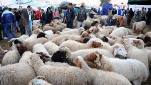 الطاعون وضعف الأجور يدفعان أئمة تونس لطلب منع ذبح الأضاحي لهذا العام