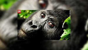 صور جذابة من الحياة البرية
