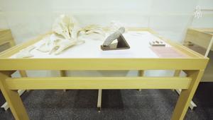 جولة في متحف مخصص بتحنيط الأعضاء الذكرية.. لأهداف علمية