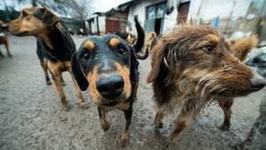 الرصاص لإعدام الكلاب الضالة في بلدان شمال إفريقيا