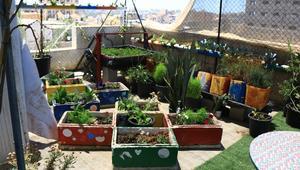 أسطح المباني في غزة تتحول لحدائق خضراء