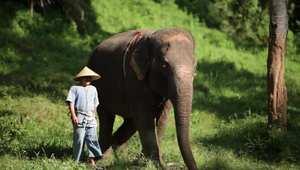 هكذا تلعب مع الفيلة وتدللها في الخيم الفاخرة في تايلاند