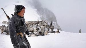 هل تعرف لم ترعى القبائل المنغولية غزلان الرنة؟