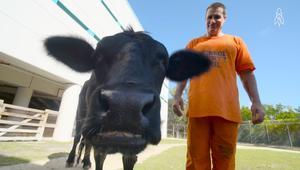 حديقة حيوانات داخل السجن.. يعتني بها السجناء