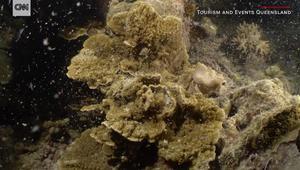 شاهدوا كيفية تكاثر المرجان في الحيد العظيم