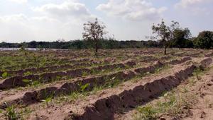 """دلتا النيل في خطر..هل تنجو """"سلة خبز"""" الأرض الأصلية؟"""