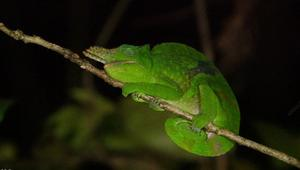 استكشف غابات تنزانيا.. كنوز الطبيعة الخفية