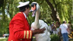 """تعرف إلى عمل هذه الدورية الملكية في جمع طيور """"البجع"""" الخاصة بملكة انجلترا"""