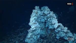 اكتشاف إسفنجة بحجم حافلة في أعماق البحر!