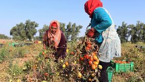 وزيرة تونسية: المرأة تعمل ثماني مرات أكثر من الرجل.. ويجب توسيع عطلة الأبوة
