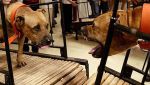 هل يمكن استخدام الحيوانات بالفن؟ شاهد تجربة هذا المتحف