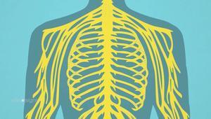 كيف يعمل الجهاز العصبي في الجسم؟