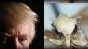 شعر ترامب يوحي لمكتشف باسم حشرة جديدة