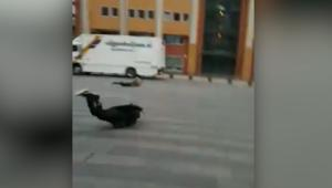شاهد.. رياح قوية تقذف بالبشر في شوارع هولندا