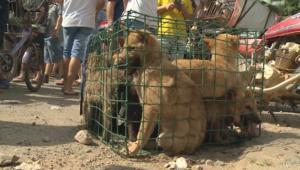 مهرجان أكل لحم الكلاب في الصين يسبب غضباً عالمياً