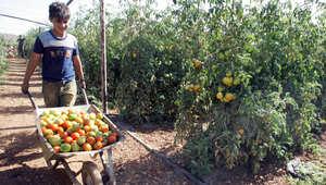 """قرار أوروبي بـ""""تمييز"""" منتجات المستوطنات يثير غضباً بإسرائيل"""